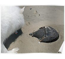 Encounter The Horseshoe Crab Poster