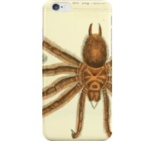 The Animal Kingdom by Georges Cuvier, PA Latreille, and Henry McMurtrie 1834  360 - Arachnides Arachnids iPhone Case/Skin