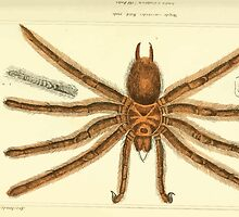 The Animal Kingdom by Georges Cuvier, PA Latreille, and Henry McMurtrie 1834  360 - Arachnides Arachnids by wetdryvac