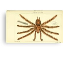 The Animal Kingdom by Georges Cuvier, PA Latreille, and Henry McMurtrie 1834  360 - Arachnides Arachnids Canvas Print