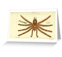 The Animal Kingdom by Georges Cuvier, PA Latreille, and Henry McMurtrie 1834  360 - Arachnides Arachnids Greeting Card
