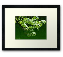 Clean and Pure Framed Print