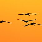Flying Free by Jim Haley