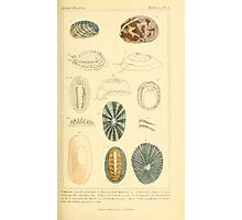 The Animal Kingdom by Georges Cuvier, PA Latreille, and Henry McMurtrie 1834  258 - Mollusca Mollusks Photographic Print