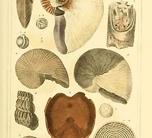 The Animal Kingdom by Georges Cuvier, PA Latreille, and Henry McMurtrie 1834  217 - Mollusca Mollusks by wetdryvac