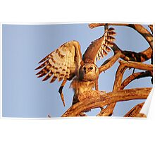 THE GIANT EAGLE OWL - and the weavers nest Poster