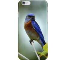 Blue Bird Pose iPhone Case/Skin