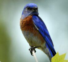 Blue Bird Pose Sticker