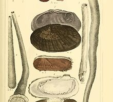 The Animal Kingdom by Georges Cuvier, PA Latreille, and Henry McMurtrie 1834  280 - Mollusca Mollusks by wetdryvac