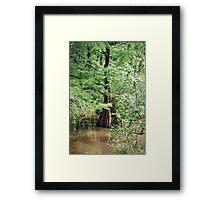 Louisiana Cypress Framed Print