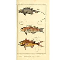 The Animal Kingdom by Georges Cuvier, PA Latreille, and Henry McMurtrie 1834  050 - Pisces Fish Photographic Print
