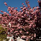Tree in Bloom by Country  Pursuits