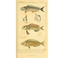 The Animal Kingdom by Georges Cuvier, PA Latreille, and Henry McMurtrie 1834  100 - Pisces Fish Photographic Print