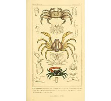 The Animal Kingdom by Georges Cuvier, PA Latreille, and Henry McMurtrie 1834  308 - Crustacea Crustaeans Photographic Print