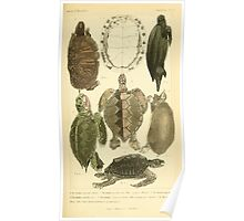 The Animal Kingdom by Georges Cuvier, PA Latreille, and Henry McMurtrie 1834  004 - Reptilia Reptiles Poster