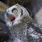 What a Yawn by ChuckCheatham