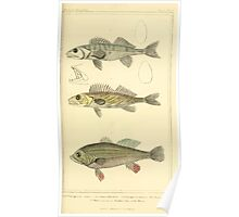 The Animal Kingdom by Georges Cuvier, PA Latreille, and Henry McMurtrie 1834  047 - Pisces Fish Poster