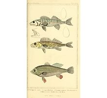 The Animal Kingdom by Georges Cuvier, PA Latreille, and Henry McMurtrie 1834  047 - Pisces Fish Photographic Print