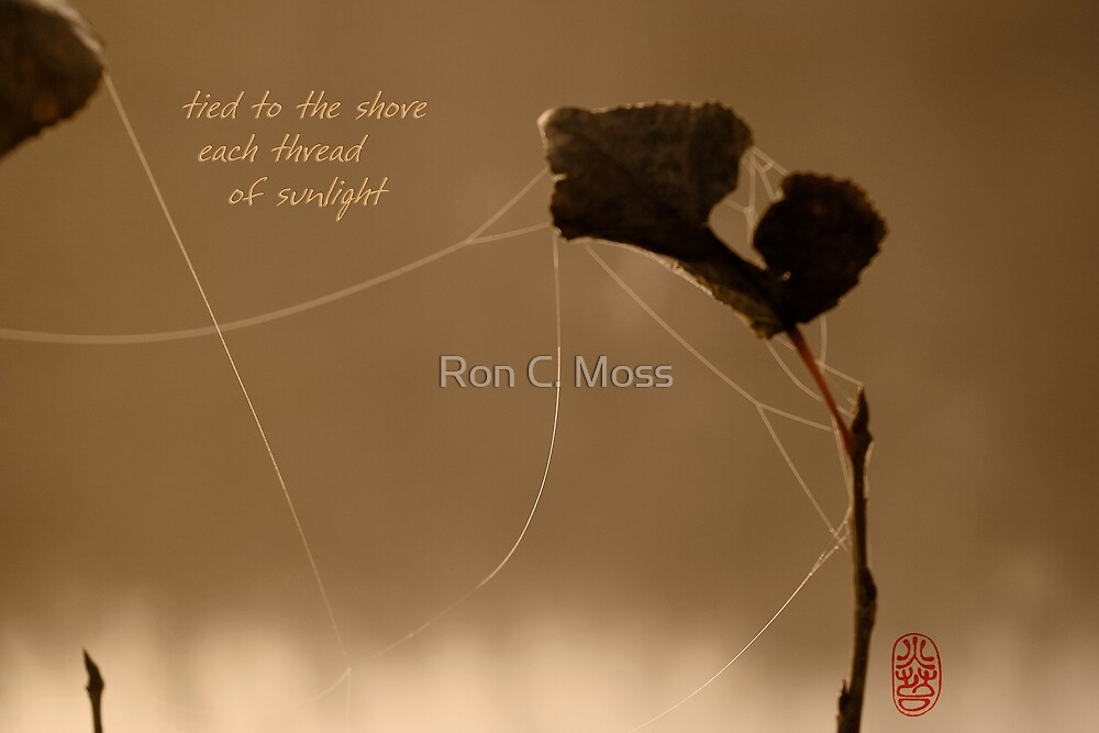 autumn gold by Ron C. Moss