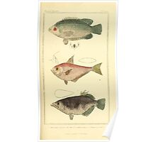 The Animal Kingdom by Georges Cuvier, PA Latreille, and Henry McMurtrie 1834  137 - Pisces Fish Poster