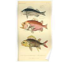 The Animal Kingdom by Georges Cuvier, PA Latreille, and Henry McMurtrie 1834  068 - Pisces Fish Poster