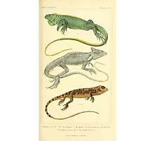 The Animal Kingdom by Georges Cuvier, PA Latreille, and Henry McMurtrie 1834  023 - Reptilia Reptiles Photographic Print