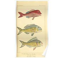 The Animal Kingdom by Georges Cuvier, PA Latreille, and Henry McMurtrie 1834  113 - Pisces Fish Poster
