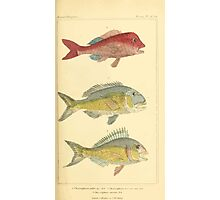 The Animal Kingdom by Georges Cuvier, PA Latreille, and Henry McMurtrie 1834  113 - Pisces Fish Photographic Print