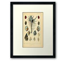 The Animal Kingdom by Georges Cuvier, PA Latreille, and Henry McMurtrie 1834  252 - Mollusca Mollusks Framed Print