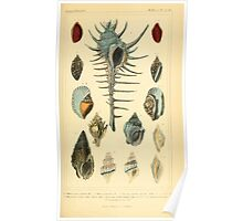 The Animal Kingdom by Georges Cuvier, PA Latreille, and Henry McMurtrie 1834  252 - Mollusca Mollusks Poster