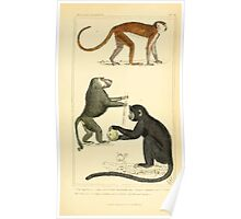The Animal Kingdom by Georges Cuvier, PA Latreille, and Henry McMurtrie 1834 573 - Mammalia Mammals Poster