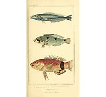 The Animal Kingdom by Georges Cuvier, PA Latreille, and Henry McMurtrie 1834  163 - Pisces Fish Photographic Print