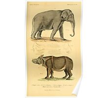 The Animal Kingdom by Georges Cuvier, PA Latreille, and Henry McMurtrie 1834 620 - Mammalia Mammals Poster