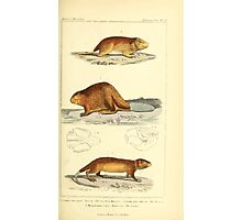 The Animal Kingdom by Georges Cuvier, PA Latreille, and Henry McMurtrie 1834 604 - Mammalia Mammals Photographic Print