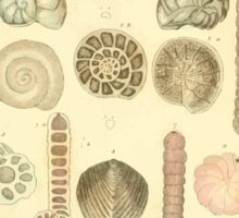 The Animal Kingdom by Georges Cuvier, PA Latreille, and Henry McMurtrie 1834  221 - Mollusca Mollusks Sticker