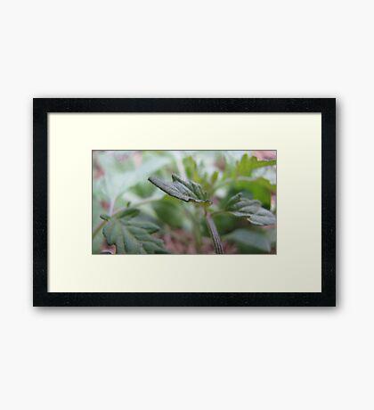 Tiny Life Framed Print