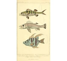 The Animal Kingdom by Georges Cuvier, PA Latreille, and Henry McMurtrie 1834  048 - Pisces Fish Photographic Print