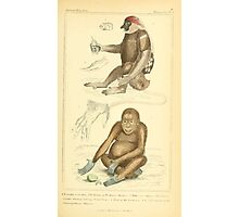 The Animal Kingdom by Georges Cuvier, PA Latreille, and Henry McMurtrie 1834 571 - Mammalia Mammals Photographic Print