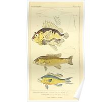The Animal Kingdom by Georges Cuvier, PA Latreille, and Henry McMurtrie 1834  056 - Pisces Fish Poster