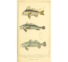 The Animal Kingdom by Georges Cuvier, PA Latreille, and Henry McMurtrie 1834  111 - Pisces Fish Photographic Print