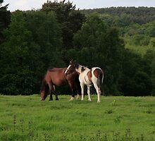 Horse home by Tony Kemp
