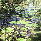 Water Pads by thomasberryman