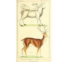 The Animal Kingdom by Georges Cuvier, PA Latreille, and Henry McMurtrie 1834 629 - Mammalia Mammals Photographic Print