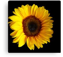Sunflower....Helianthus annuus Canvas Print
