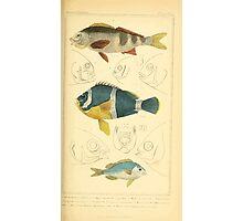 The Animal Kingdom by Georges Cuvier, PA Latreille, and Henry McMurtrie 1834  084 - Pisces Fish Photographic Print