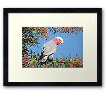 Beauty in the Morning, the other side. Framed Print