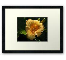 Stella De Oro Lily Framed Print