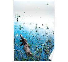 sterling peat pond  Poster