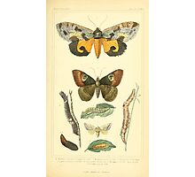 The Animal Kingdom by Georges Cuvier, PA Latreille, and Henry McMurtrie 1834  519 - Insecta Insects Photographic Print