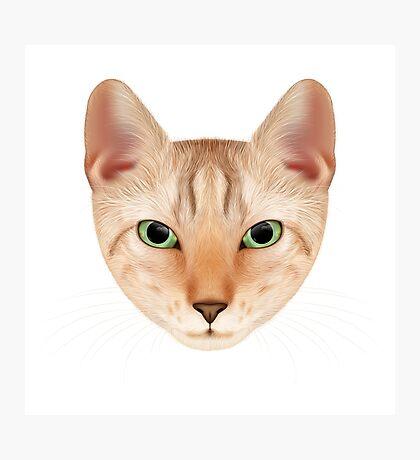 Cat face portrait. Photographic Print